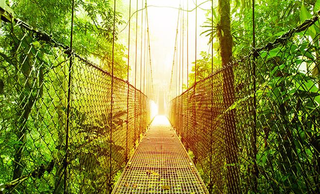 Bild von Arenal Hanging Bridges Ökologisches Reservat, Naturpark Regenwaldpark, Stadt La Fortuna de San Carlos, Costa Rica, Mittelamerika, Fußgängerbrücke im Dschungel, Reise- und Tourismuskonzept